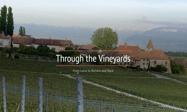 Through the Vineyards